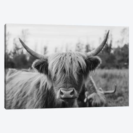 Highland Cow Black and White Canvas Print #CVA293} by Chelsea Victoria Canvas Art Print