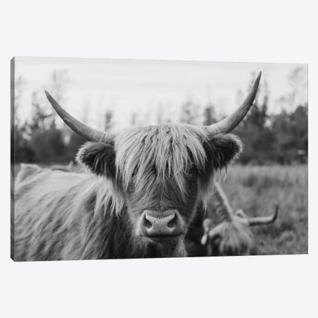Highland Cow Black and White Canvas Print #CVA293} by Chelsea Victoria Canvas Art Print