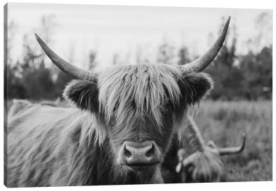 Highland Cow Black and White Canvas Art Print
