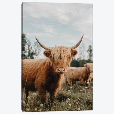 Highland Cow Canvas Print #CVA294} by Chelsea Victoria Canvas Artwork