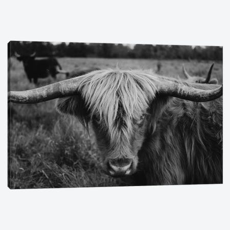 Highland Cow Black And White Canvas Print #CVA297} by Chelsea Victoria Canvas Wall Art
