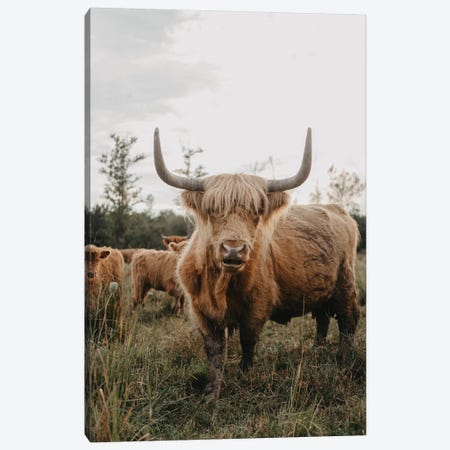 The Curious Highland Cow Canvas Print #CVA298} by Chelsea Victoria Canvas Print