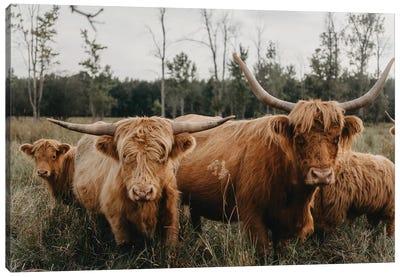 Highland Cow Herd Canvas Art Print