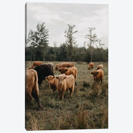Cows in The Field Canvas Print #CVA300} by Chelsea Victoria Art Print