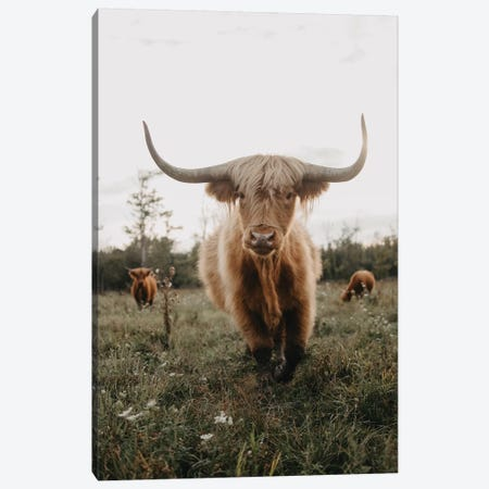 Highland Cow At Sunset Canvas Print #CVA301} by Chelsea Victoria Canvas Print