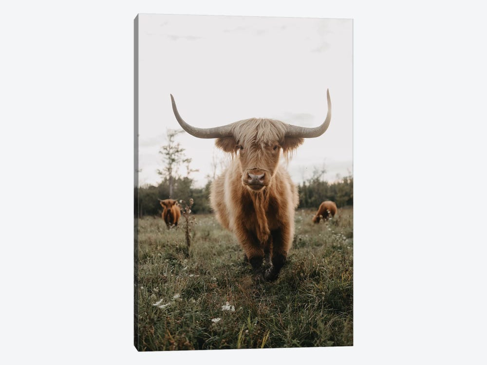 Highland Cow At Sunset by Chelsea Victoria 1-piece Canvas Print