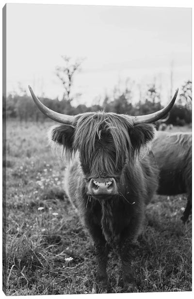 The Curious Cow Black and White Canvas Art Print