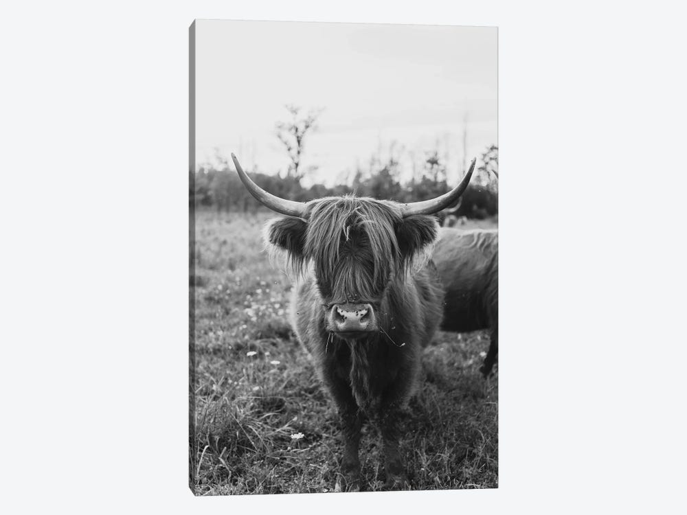 The Curious Cow Black and White by Chelsea Victoria 1-piece Canvas Art