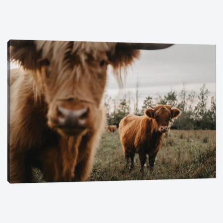The Highland Cows Canvas Print #CVA305} by Chelsea Victoria Canvas Wall Art