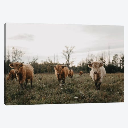 Highland Cows At Sunset Canvas Print #CVA307} by Chelsea Victoria Canvas Art