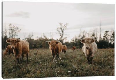Highland Cows At Sunset Canvas Art Print