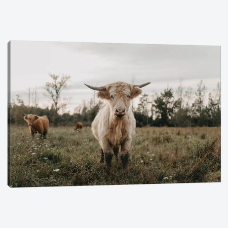 The Curious White Highland Cow Canvas Print #CVA308} by Chelsea Victoria Canvas Art Print
