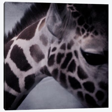 Giraffe II Canvas Print #CVA30} by Chelsea Victoria Canvas Artwork