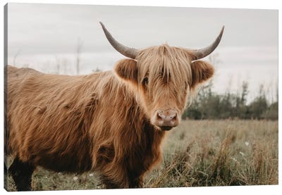 Stoic Highland Cow Canvas Art Print