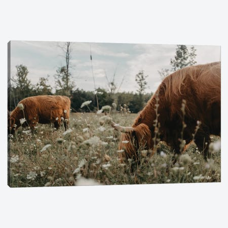 Highland Cows In The Meadow Canvas Print #CVA313} by Chelsea Victoria Canvas Artwork
