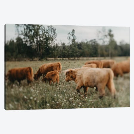 Highland Cattle Canvas Print #CVA314} by Chelsea Victoria Art Print