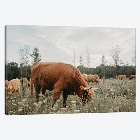 Highland Cow Grazing In The Meadow Canvas Print #CVA315} by Chelsea Victoria Canvas Art Print