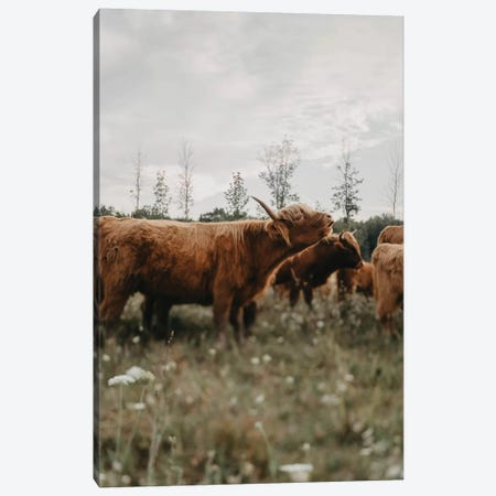 Highland Cow Mooing Canvas Print #CVA317} by Chelsea Victoria Canvas Print