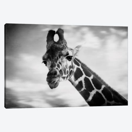 Giraffe I Canvas Print #CVA31} by Chelsea Victoria Canvas Art