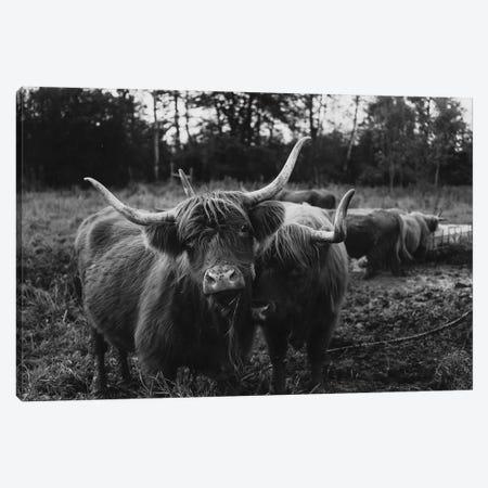 Highland Cows Black And White Canvas Print #CVA323} by Chelsea Victoria Art Print
