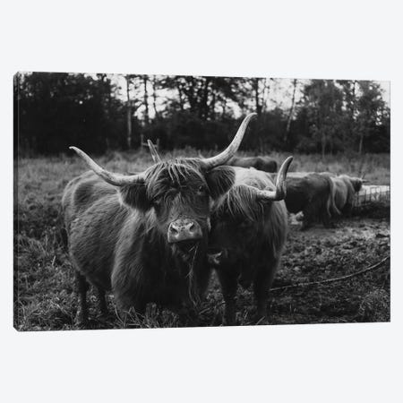 Highland Cows Black And White Canvas Print #CVA323} by Chelsea Victoria Art Print