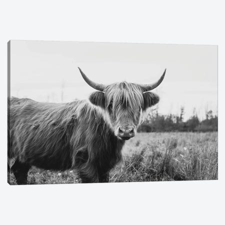 Furry Highland Cow Black And White Canvas Print #CVA324} by Chelsea Victoria Canvas Artwork
