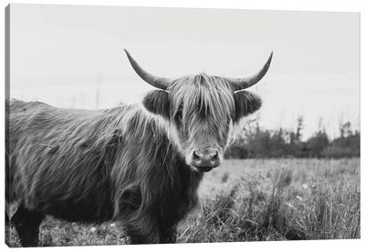 Furry Highland Cow Black And White Canvas Art Print