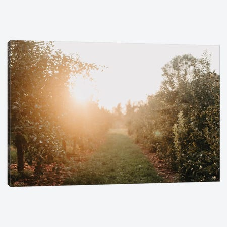 Apple Orchard Canvas Print #CVA326} by Chelsea Victoria Canvas Art
