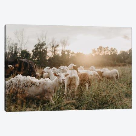Sheep In The Field Canvas Print #CVA330} by Chelsea Victoria Canvas Wall Art
