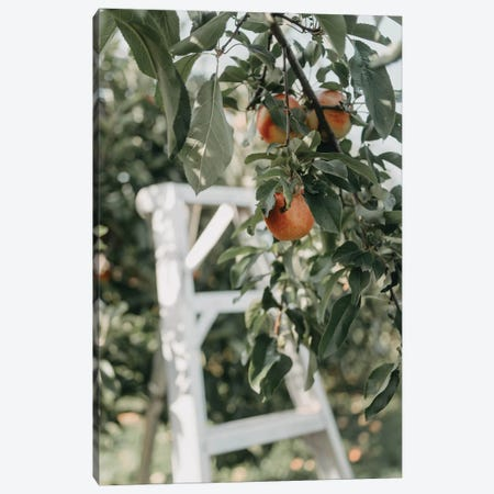 Apples In The Orchard Canvas Print #CVA333} by Chelsea Victoria Canvas Wall Art