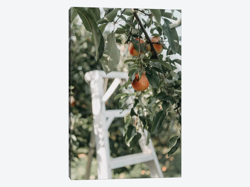 Apples In The Orchard by Chelsea Victoria 1-piece Canvas Artwork