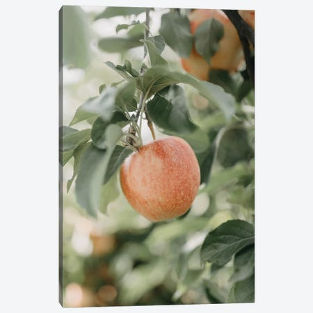 Apple In The Orchard Canvas Print #CVA334} by Chelsea Victoria Art Print