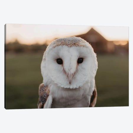 Barn Owl Canvas Print #CVA336} by Chelsea Victoria Art Print