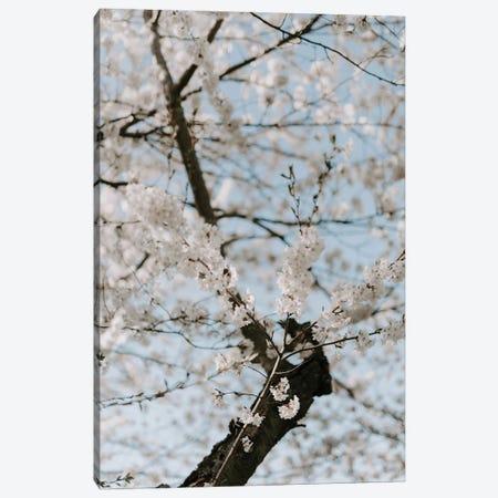 Washington Blossoms Canvas Print #CVA350} by Chelsea Victoria Canvas Art