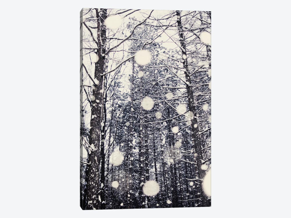Into The Woods by Chelsea Victoria 1-piece Canvas Art