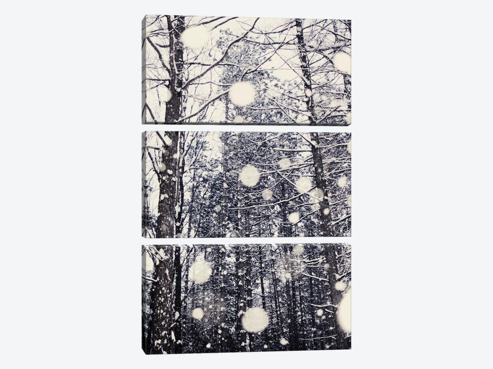 Into The Woods by Chelsea Victoria 3-piece Canvas Artwork