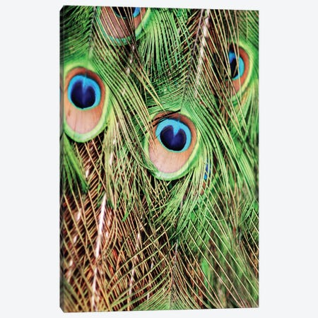 Shake Your Tailfeather II Canvas Print #CVA59} by Chelsea Victoria Canvas Artwork