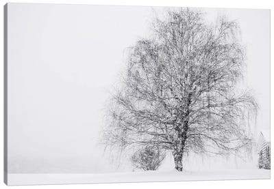 Snow Again Canvas Art Print