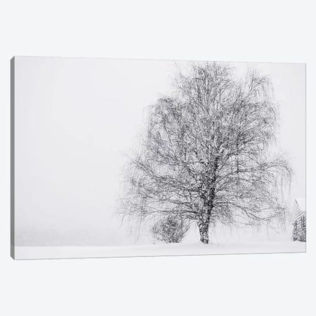 Snow Again Canvas Print #CVA70} by Chelsea Victoria Canvas Art