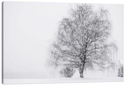 Snow Again Canvas Art Print