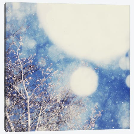 Snow And Trees II Canvas Print #CVA71} by Chelsea Victoria Canvas Art