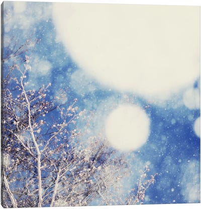 Snow And Trees II Canvas Art Print