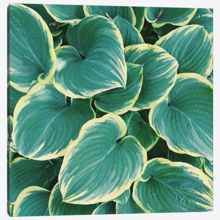Some Like It Hosta Canvas Print #CVA76} by Chelsea Victoria Art Print