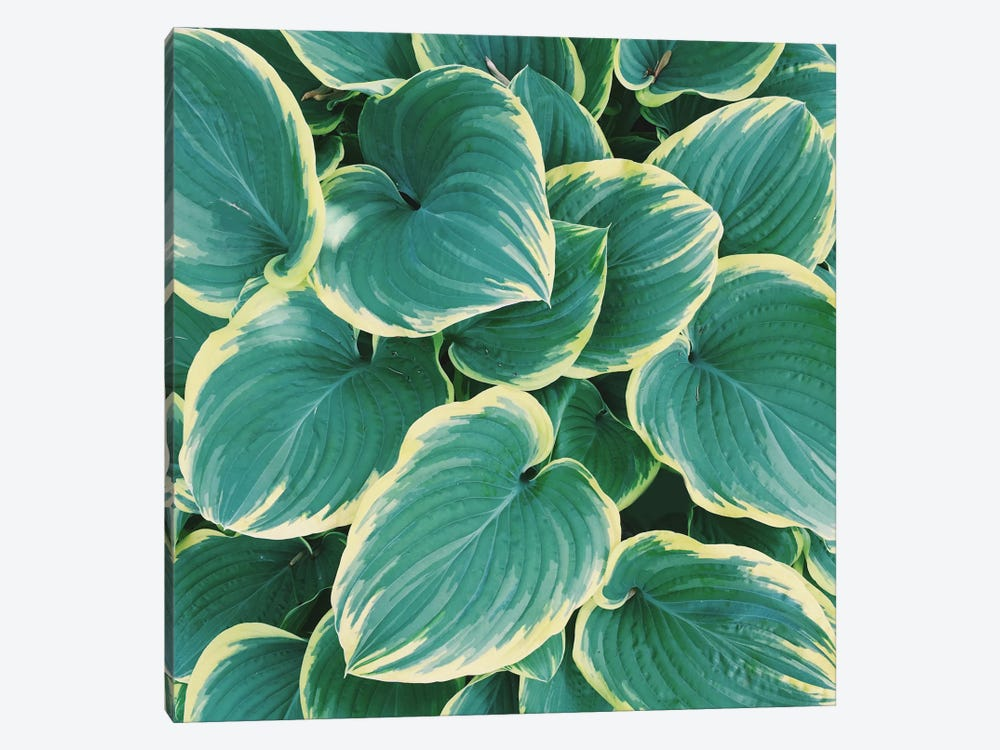Some Like It Hosta by Chelsea Victoria 1-piece Canvas Art Print