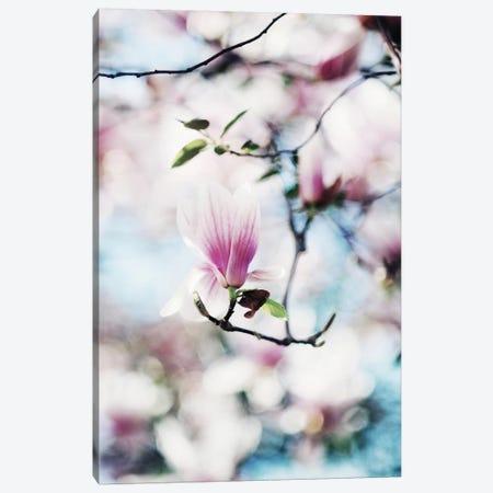 Spring In Bloom Canvas Print #CVA78} by Chelsea Victoria Canvas Art