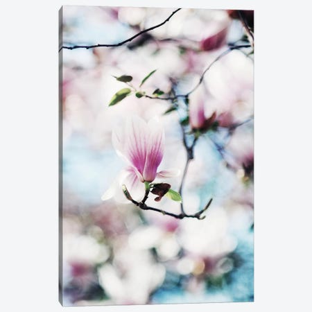 Spring In Bloom Canvas Print #CVA78} by Chelsea Victoria Canvas Art