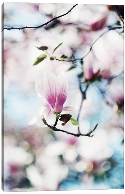 Spring In Bloom Canvas Art Print