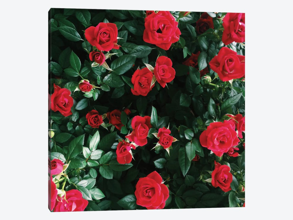 The Bel Air Rose Garden 1-piece Canvas Artwork