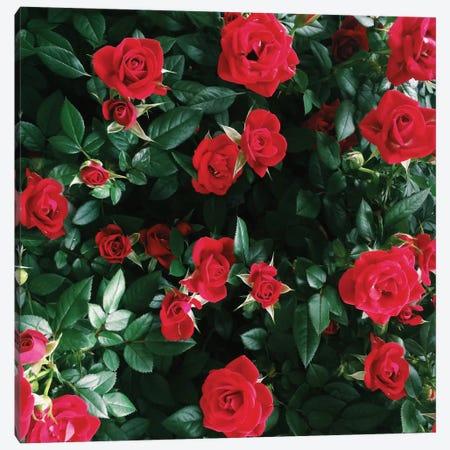The Bel Air Rose Garden Canvas Print #CVA82} by Chelsea Victoria Art Print