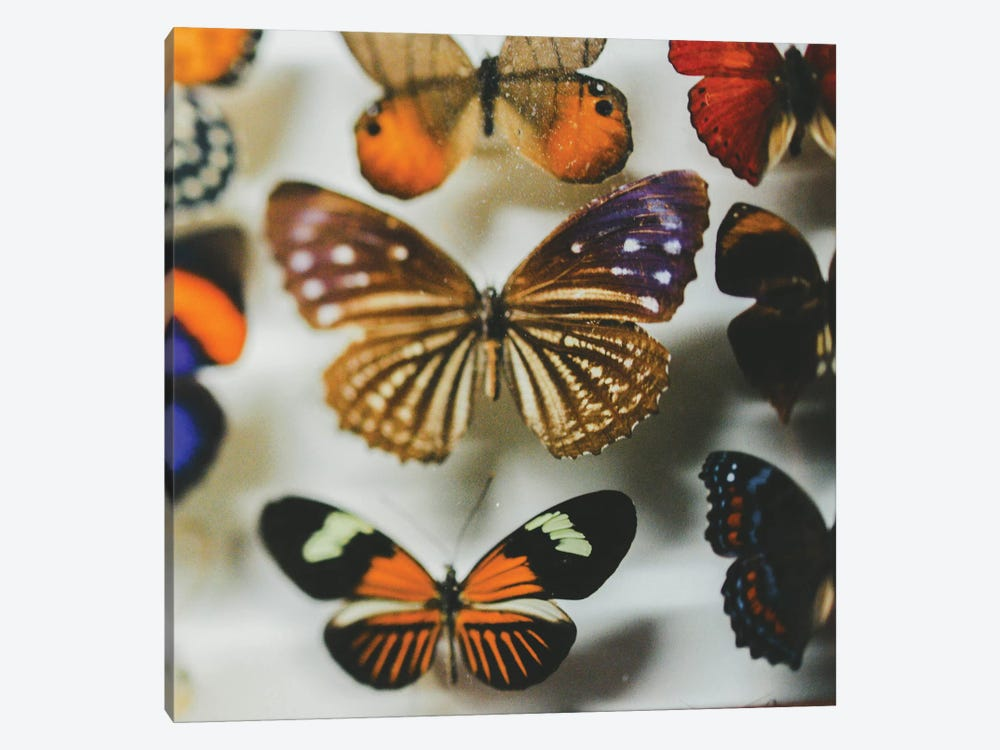 The Fairy Collection by Chelsea Victoria 1-piece Canvas Print